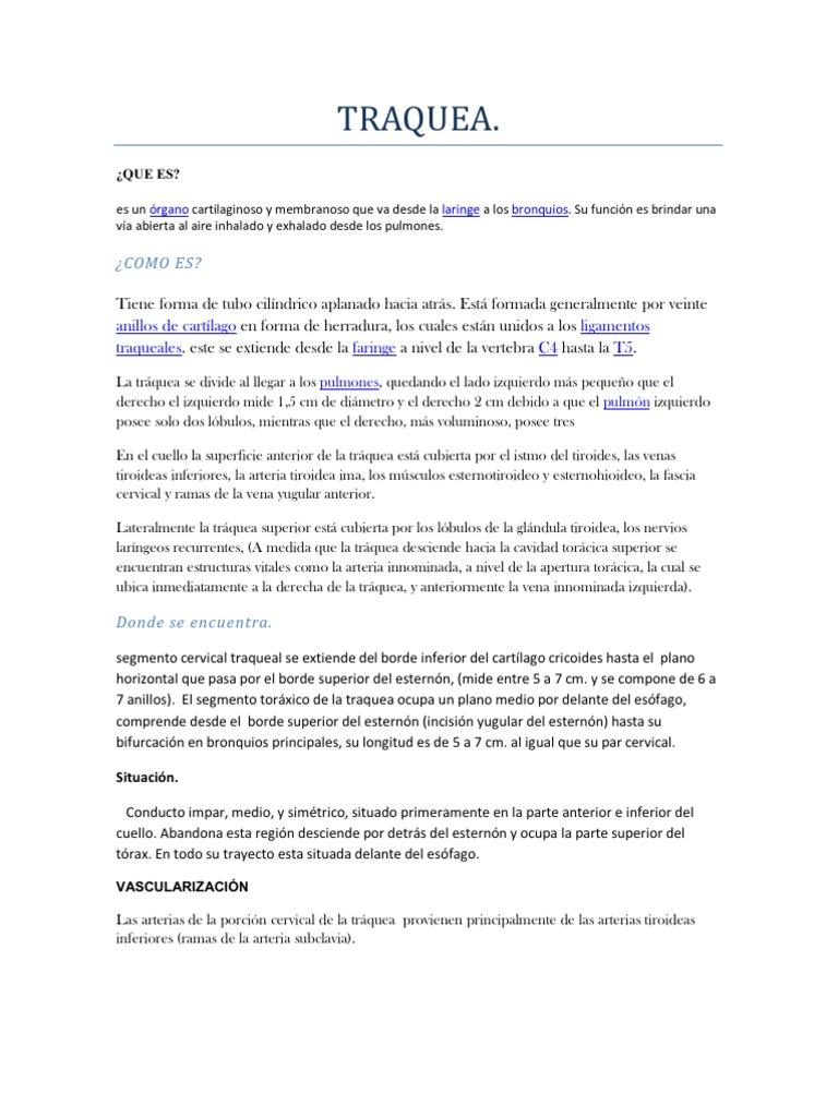 Lujo Vena Innominada Embellecimiento - Anatomía de Las Imágenesdel ...
