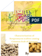 Characterization of Streptomyces Scabies in Potato
