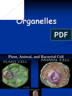 Organelles - Presentation With Graphics