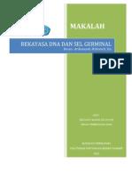 Rekayasa Dna Dan Sel Germinal