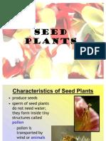 Seed Plants