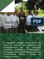 morfofisiologia animal 2