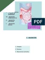 Mecanismos de Absorcion Intestinal Nutrientes