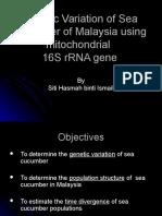 Proposal Presentation Sea Cucumber
