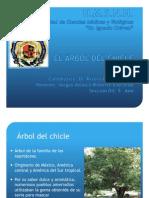 a) EL ÁRBOL DEL CHICLE