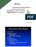 Bone Academia