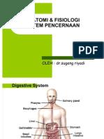 05anatomi-fisiologi-pencernaan2