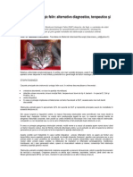 Sindromul Urologic Felin Rox