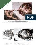 Hypothalamus Und Hypophyse