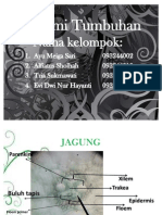 Presentasi Anatomi Tumbuhan