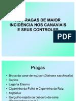 As pragas de maior incidência nos canaviais e seus controles
