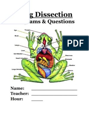 Frog Dissection Packet | Human Digestive System | Bile