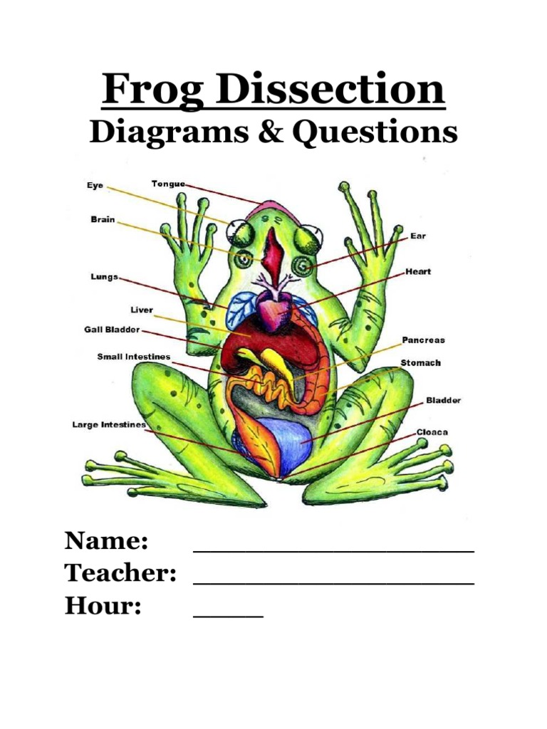 worksheet. Frog Dissection Worksheet. Grass Fedjp Worksheet Study Site