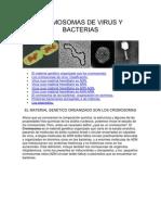 .Cromosomas de Virus y Bacterias