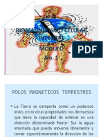 BIOMAGNETISMO-1