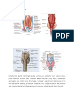 Anatomi Dan Histologi Kelenjar Parathyroid