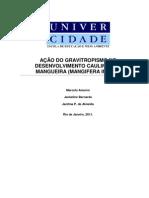 Artigo Cientifico Gravitropismo da Mangueira