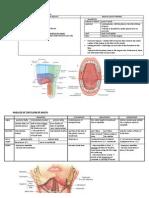 Mouth Cavity, Muscle of Soft Palate
