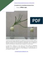 Aprendizaje Significativo Células de Allium Cepa