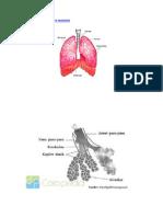 Cara kerja paru