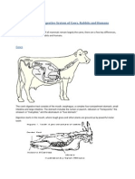 Comparison of the Digestive System of Cows