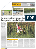 La nueva atracción de los pantanos, la espátula rosada llegó a Villa
