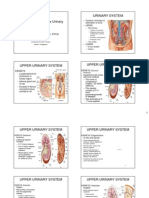 Urinary Tract Anatomy 2007