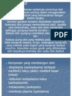 Power Point Sistem Otot Fidoh