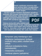 Power Point Sistem Otot Fidoh