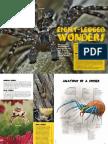Eight Legged Wonders