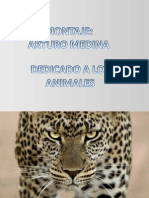 Presentaci_n1ANIMALES