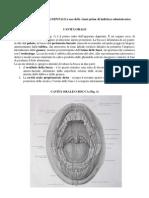 Anatomia-dentale1