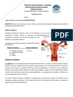 Taller No 010 Aparato Re Product Or Femenino