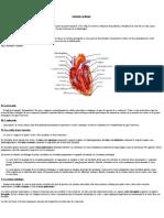 anatomophysiologie_cardiaque
