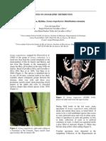 Scinax trapicheiroi