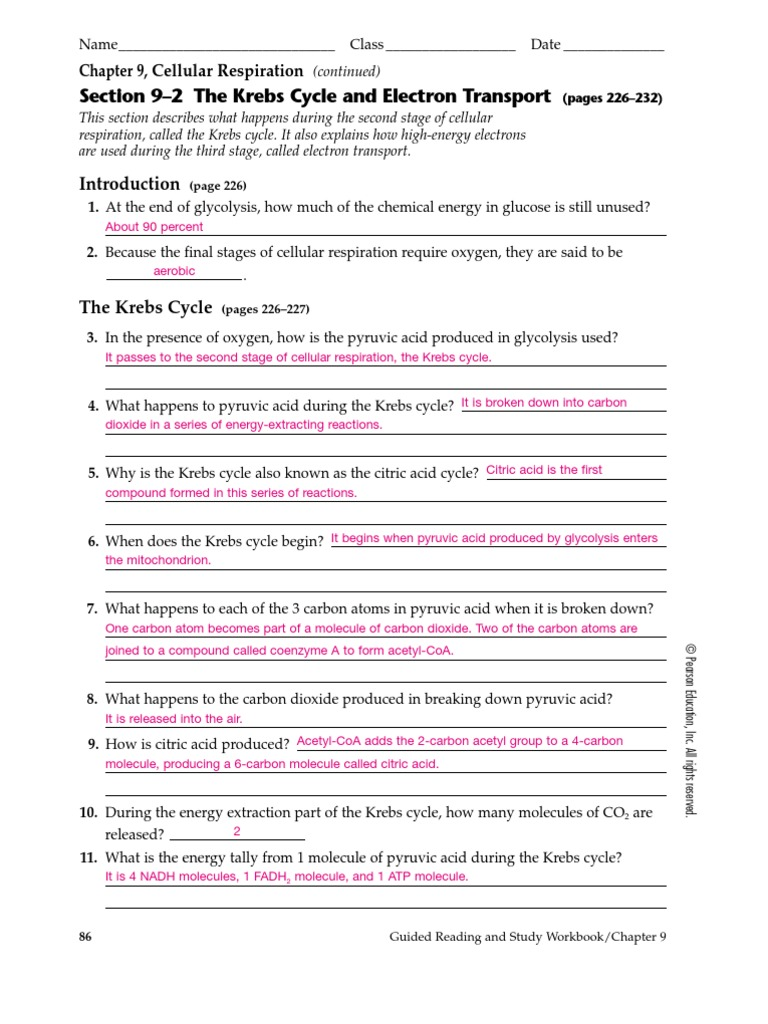 Guided Reading And Study Workbook Chapter
