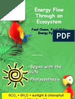 Ecosystem Energy Flow