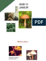 Bab 6 jamur