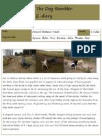 The Dog Rambler e-diary 29 February 2012