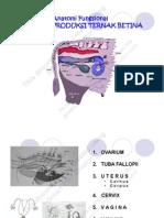 Microsoft Power Point Anatomi Dan Fungsional Organ Repr. Betina.ppt Compatibility Mode