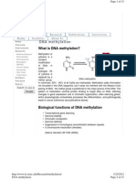 What is DNA Methyl at Ion