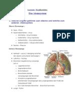 Anatomie-Das Atemsystem