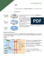 Biosintesis de ácidos grasos