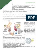 Metabolismo de lípidos