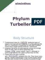 Turbellaria1