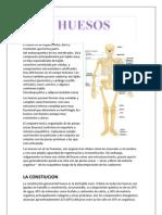 Huesos-Anatomia
