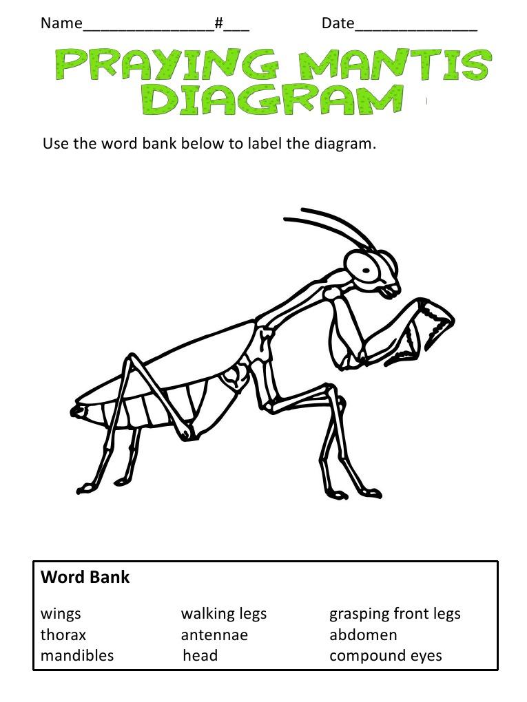 Praying Mantis Diagram - Information Of Wiring Diagram •