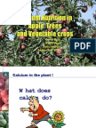 Calcium Nutrition in Apple Trees and Vegetable Crops