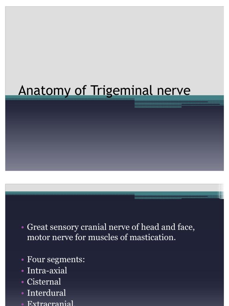 Anatomy of Trigeminal Nerve | Nervous System | Primate Anatomy