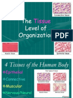 2- Body Tissues